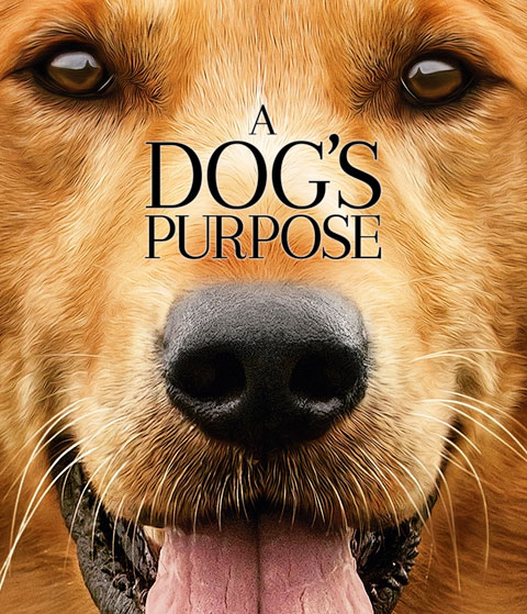 A Dog's Purpose (HD) ITunes Redeem (Ports To MA)